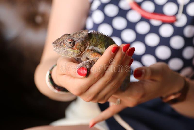 έρπον ζώο iguana στοκ φωτογραφία με δικαίωμα ελεύθερης χρήσης