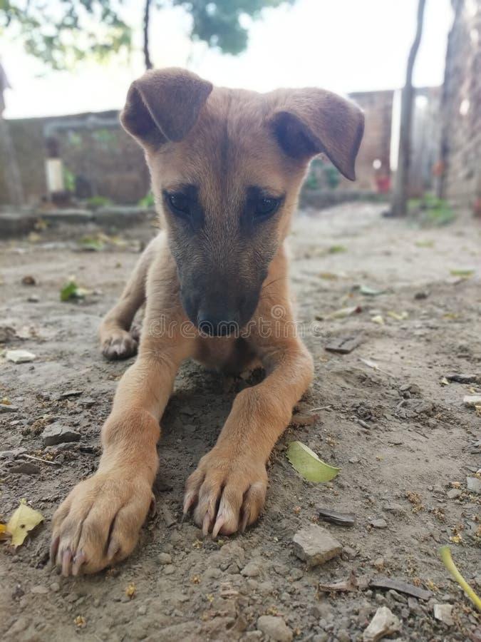 Έτσι cutie σκυλιά πιτών και προσοχής στοκ φωτογραφία με δικαίωμα ελεύθερης χρήσης