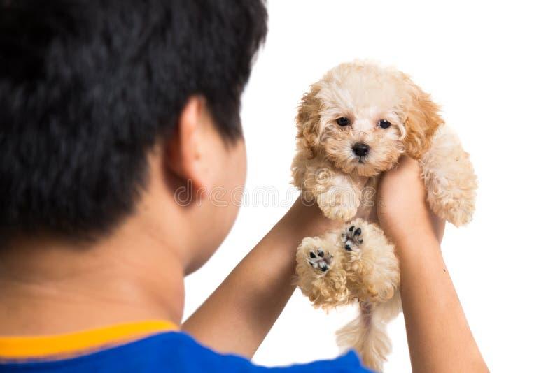 Έφηβος που αγκαλιάζει ένα χαριτωμένο poodle κουτάβι στοκ εικόνες
