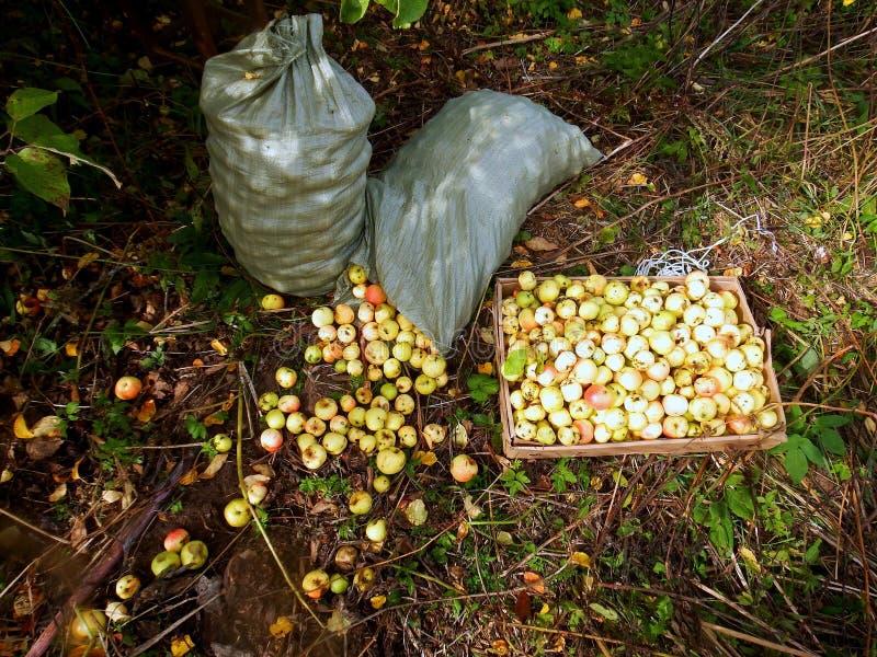 έδαφος μήλων στοκ φωτογραφία