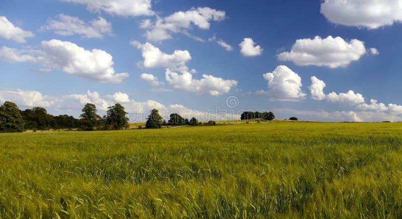Έδαφος πράσινων ζωνών αστικού περιβάλλοντος στοκ φωτογραφία