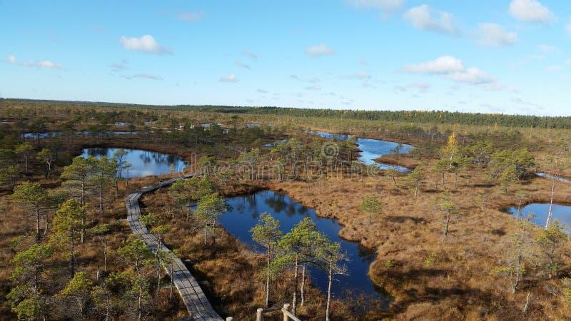 Έλη στη Λετονία στοκ φωτογραφίες με δικαίωμα ελεύθερης χρήσης