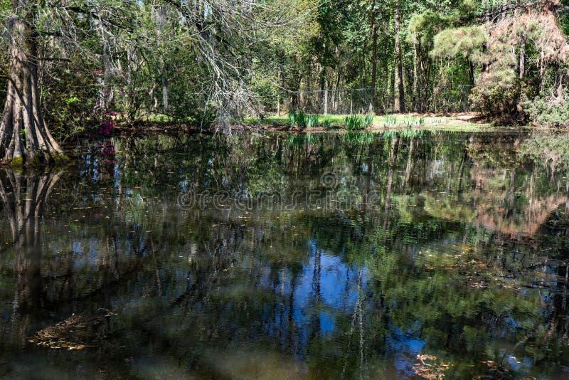 Έλος κυπαρισσιών στη νότια Καρολίνα, ΗΠΑ στοκ εικόνες