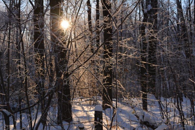 Ήλιος κατά άποψη χειμερινού τη δασική παραμυθιού στοκ φωτογραφίες
