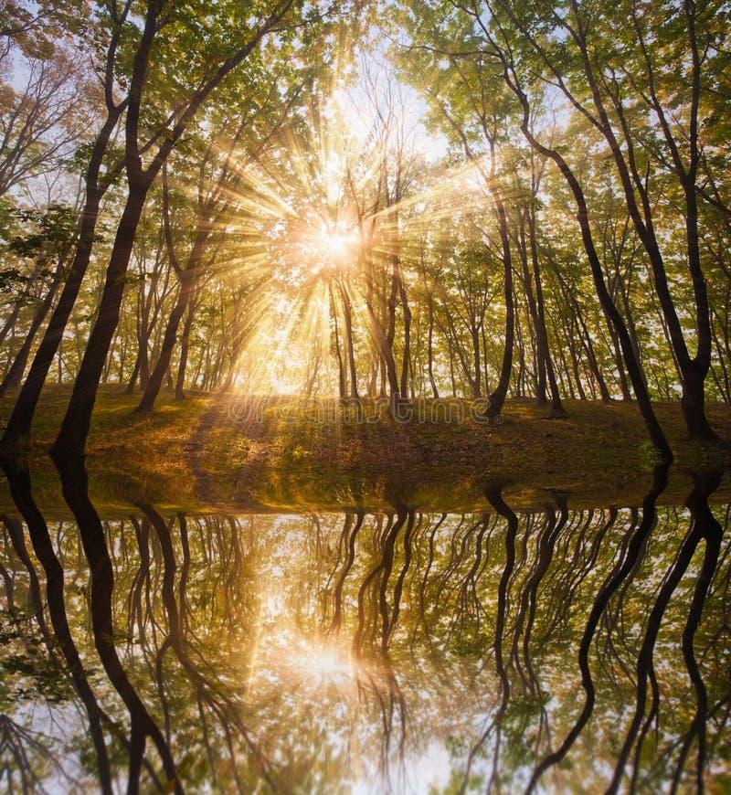 ήλιος λιμνών φθινοπώρου στοκ φωτογραφία με δικαίωμα ελεύθερης χρήσης