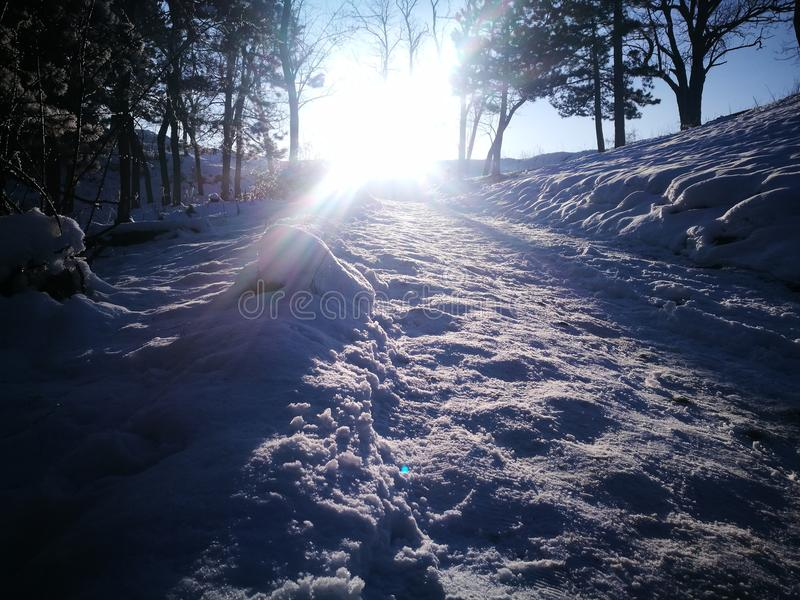 Ήλιος μεταξύ των δέντρων στοκ εικόνα με δικαίωμα ελεύθερης χρήσης