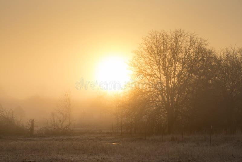 Ήλιος που αυξάνεται ακριβώς επάνω από τον ορίζοντα στην ομίχλη πέρα από ένα αγροτικό τοπίο στοκ φωτογραφίες