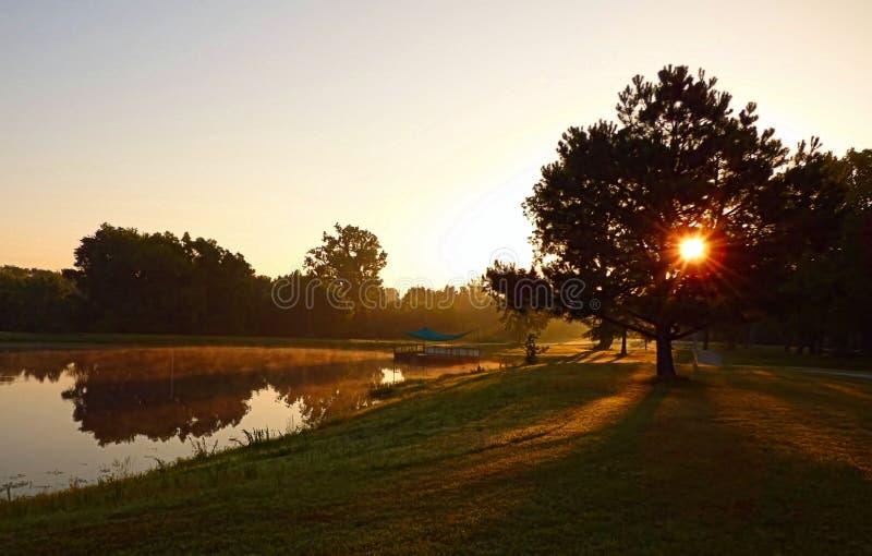 Ήλιος που λάμπει μέσω ενός δέντρου στο πάρκο στοκ εικόνα