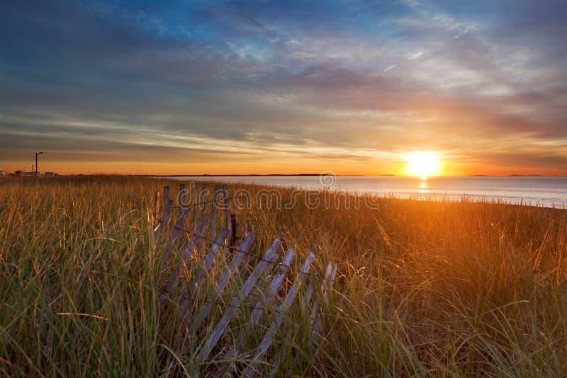 ήλιος πρωινού χλοών αμμόλ&omicron στοκ εικόνα