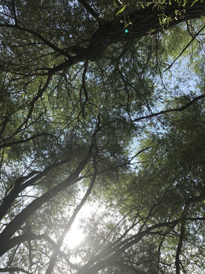 Ήλιος φύσης και πράσινου φωτός στοκ εικόνα με δικαίωμα ελεύθερης χρήσης