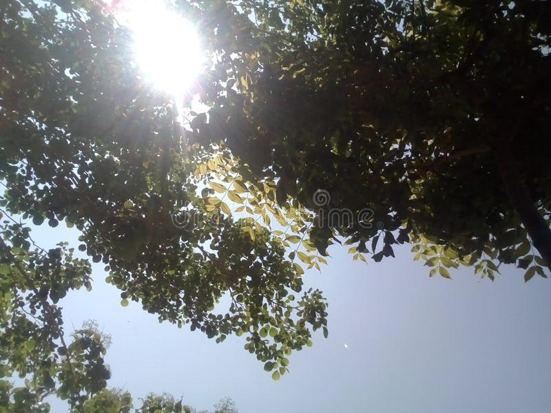 Ήλιος φύσης στοκ φωτογραφίες με δικαίωμα ελεύθερης χρήσης
