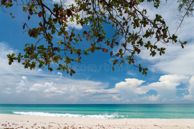Ήρεμη άποψη του φυλλώματος, της τυρκουάζ θάλασσας και της άσπρης αμμώδους παραλίας στοκ φωτογραφίες