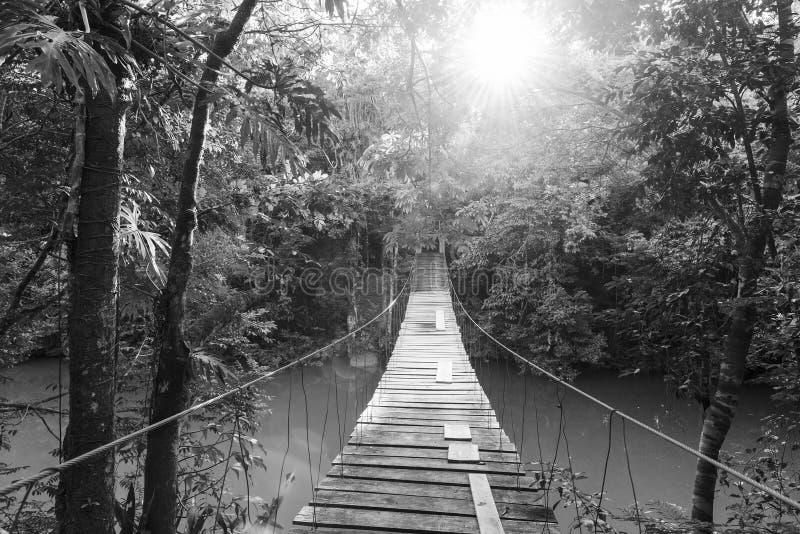 Ήρεμη δασική γέφυρα για πεζούς γραπτή στοκ εικόνες