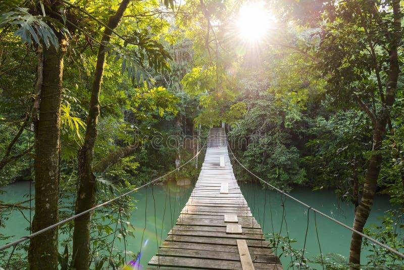 Ήρεμη δασική γέφυρα για πεζούς στοκ φωτογραφίες
