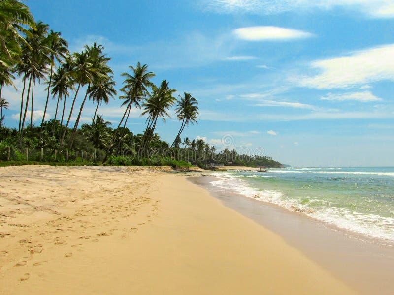 Ήρεμη παραλία με τους φοίνικες και την άμμο, Σρι Λάνκα στοκ εικόνα