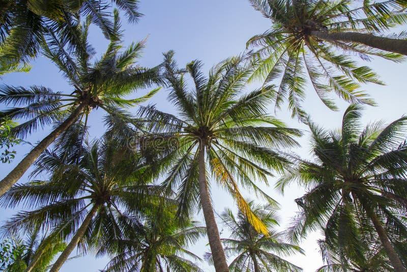 Ήρεμη παραλία με το φοίνικα στοκ φωτογραφίες με δικαίωμα ελεύθερης χρήσης