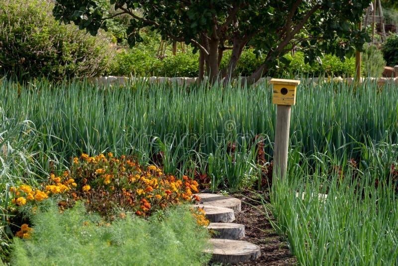 Ήρεμος, καλά εφοδιασμένος κήπος και ένα κίτρινο σπίτι πουλιών στο τέλος της πορείας στο κτήμα κρασιού Babelstoren, Νότια Αφρική στοκ εικόνα