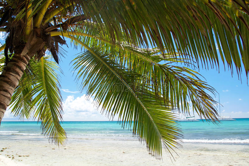 ήρεμος καραϊβικός φοίνικ&alph στοκ φωτογραφίες