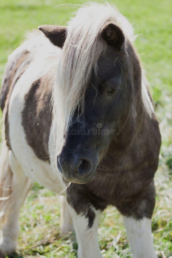 Ήρεμο άλογο στοκ φωτογραφία με δικαίωμα ελεύθερης χρήσης