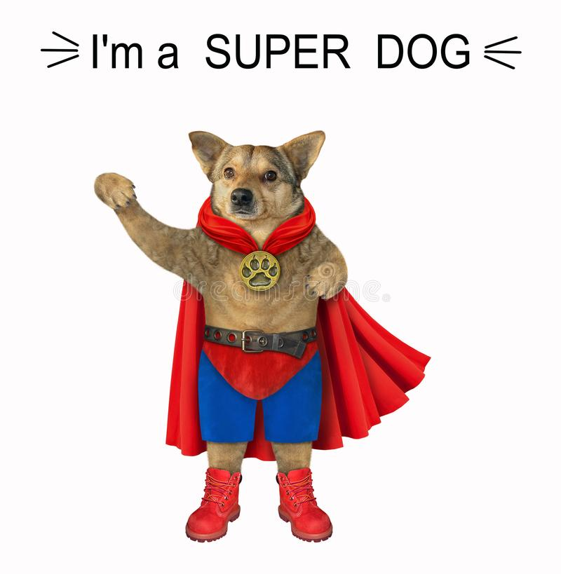 Ήρωας σκύλου με κόκκινο μανδύα 2 στοκ εικόνα