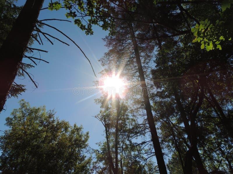 Ήλιος αν και τα δέντρα στοκ εικόνες με δικαίωμα ελεύθερης χρήσης