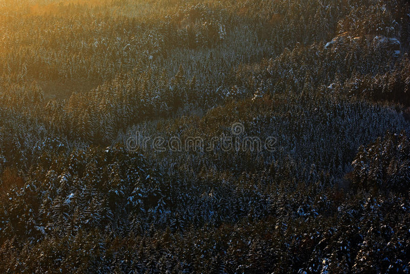 Ήλιος βραδιού στο χειμερινό τοπίο, κομψό δάσος δέντρων με το χιόνι, πάγος και πάχνη Χειμερινό λυκόφως, κρύα φύση σε δασικό Sumava στοκ εικόνες με δικαίωμα ελεύθερης χρήσης