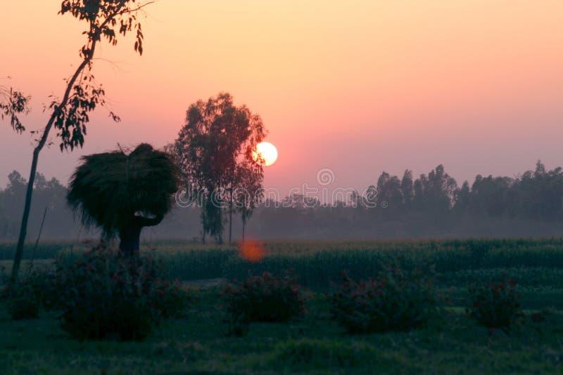 Ήλιος και αγρότης με το βάρος ορυζώνα στοκ φωτογραφίες