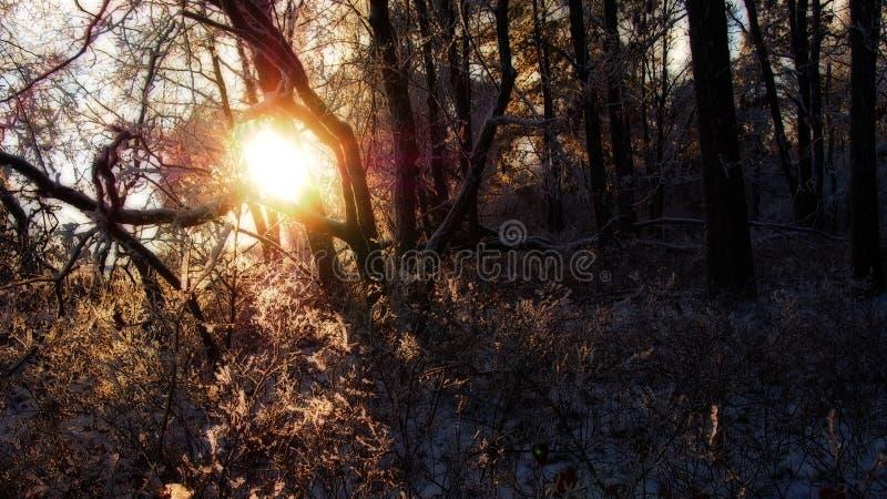 Ήλιος που λάμπει μέσω του δάσους στοκ φωτογραφίες με δικαίωμα ελεύθερης χρήσης