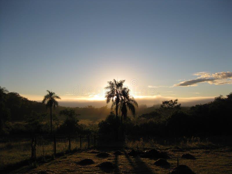 Ήλιος Risin πίσω από έναν φοίνικα κοκοφοινίκων Mbocyaty στοκ εικόνες