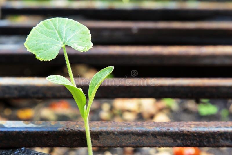 λίγο φυτό στοκ εικόνες με δικαίωμα ελεύθερης χρήσης