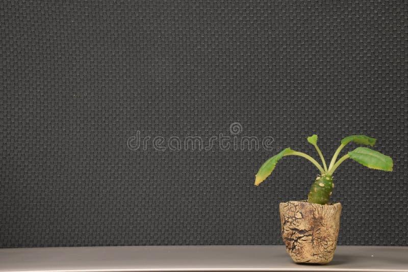 λίγο φυτό στοκ φωτογραφίες