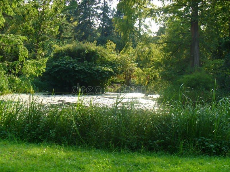 λίμνη ήρεμη στοκ εικόνα