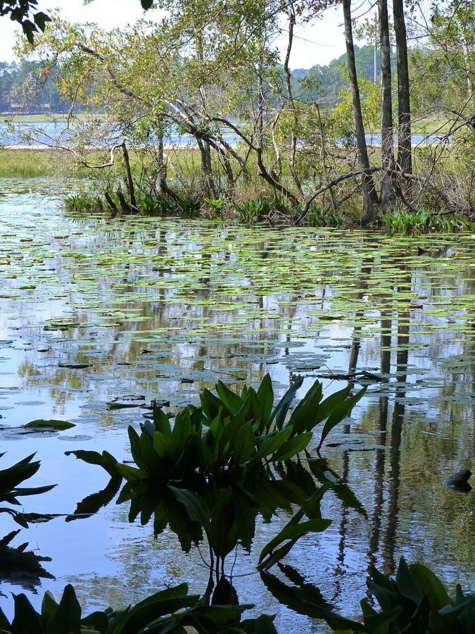 λίμνη βαλτώδης στοκ φωτογραφίες