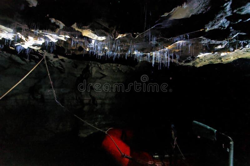 Ίνες Glowworms μέσα σε μια σπηλιά, Waitomo, Νέα Ζηλανδία στοκ εικόνα με δικαίωμα ελεύθερης χρήσης