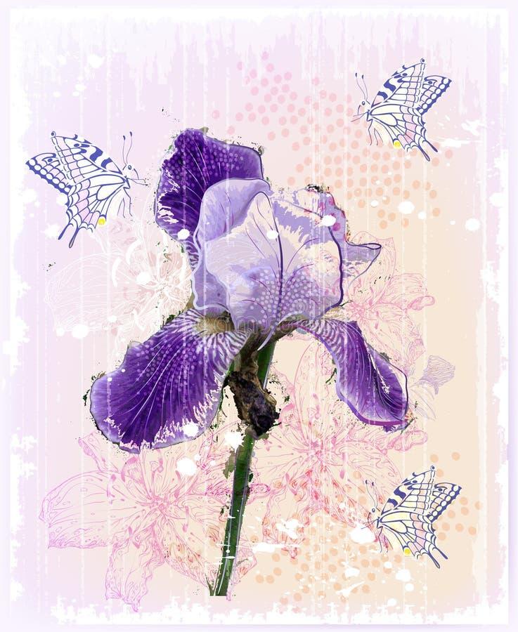 ίριδα λουλουδιών ελεύθερη απεικόνιση δικαιώματος