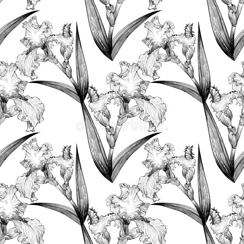 ίριδες πρότυπο άνευ ραφής Λουλούδια, φύλλα, μίσχοι και οφθαλμοί των ίριδων απεικόνιση αποθεμάτων