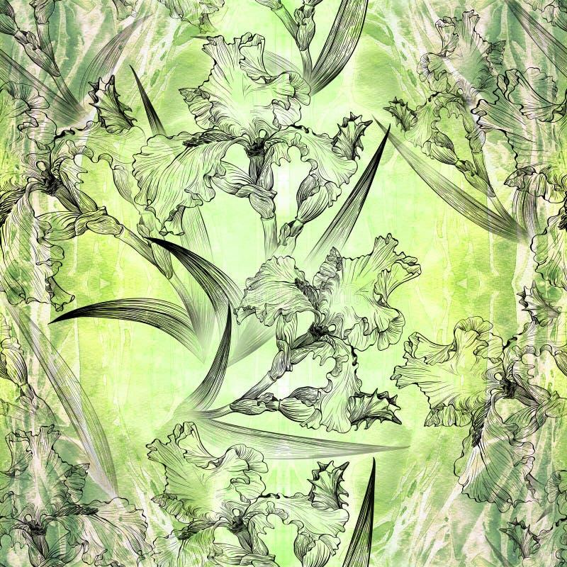 ίριδες πρότυπο άνευ ραφής Λουλούδια, φύλλα, μίσχοι και οφθαλμοί των ίριδων ταπετσαρία απεικόνιση αποθεμάτων