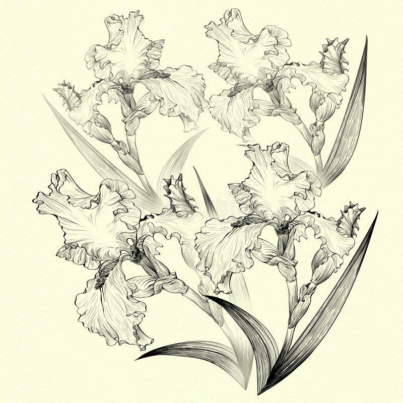 ίριδες ταπετσαρία Λουλούδια, φύλλα, μίσχοι και οφθαλμοί των ίριδων Η χρήση τύπωσε τα υλικά, σημάδια, στοιχεία, ιστοχώροι, χάρτες, απεικόνιση αποθεμάτων