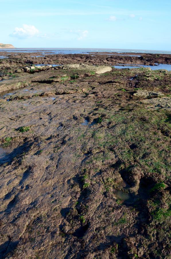 Ίχνη δεινοσαύρων, Compton παραλία, Isle of Wight στοκ φωτογραφίες