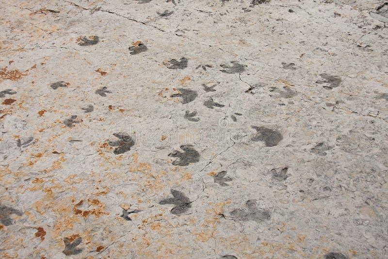 Ίχνη δεινοσαύρων trackway στοκ φωτογραφία με δικαίωμα ελεύθερης χρήσης