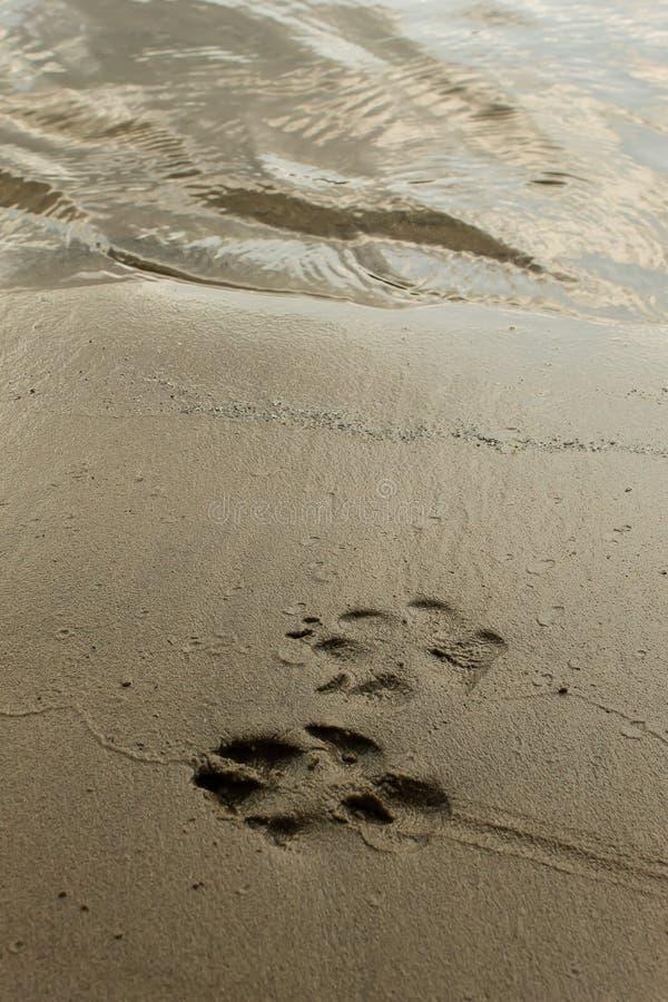 Ίχνη σκυλιών στην άμμο στοκ εικόνα με δικαίωμα ελεύθερης χρήσης