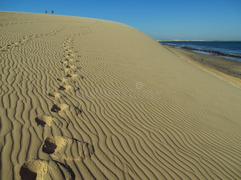Ίχνη στον αμμόλοφο στοκ φωτογραφία με δικαίωμα ελεύθερης χρήσης