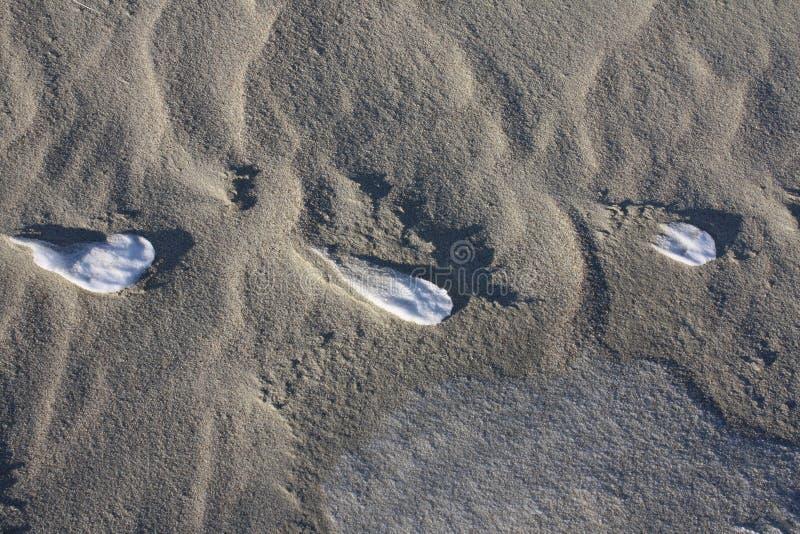 Ίχνη στους αμμόλοφους το χειμώνα στοκ φωτογραφία