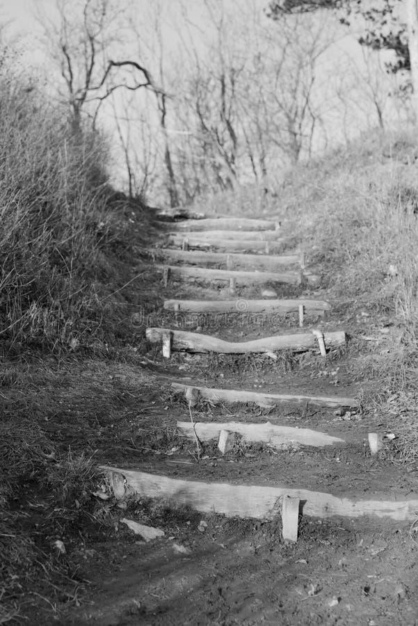 Ίχνη φύσης με σκάλα από ξύλινα κουκούλια στοκ εικόνες