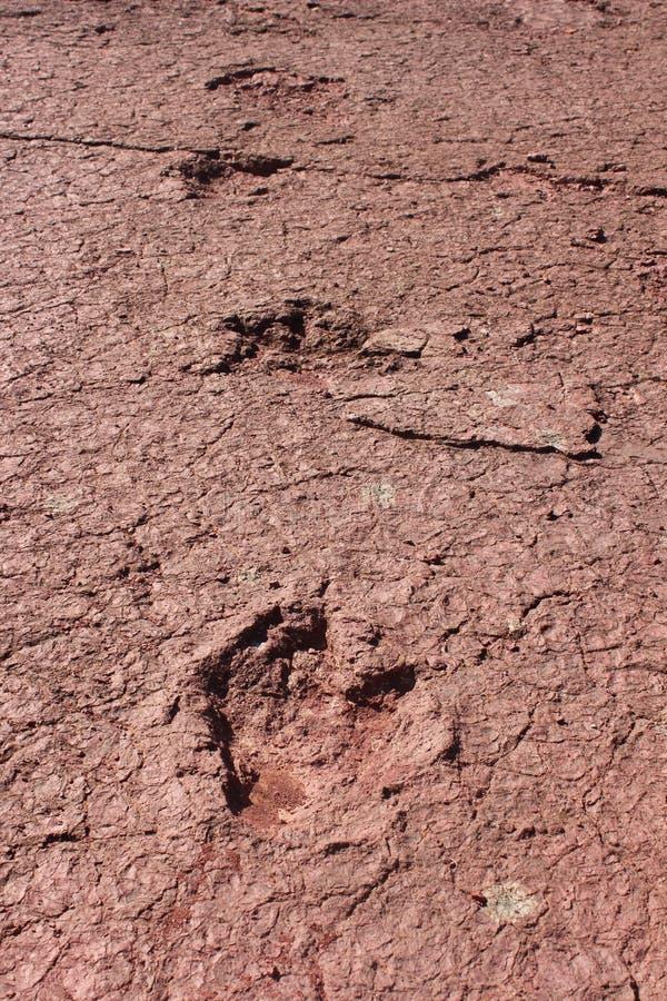 Ίχνη Stegosaurus από Louaridene, Μαρόκο στοκ εικόνες