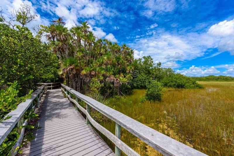 Ίχνος αιωρών μαονιού του εθνικού πάρκου Everglades r r στοκ εικόνες με δικαίωμα ελεύθερης χρήσης