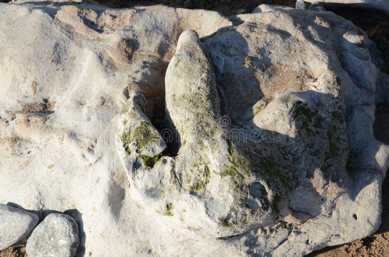 Ίχνος δεινοσαύρων, Compton παραλία, Isle of Wight στοκ εικόνες