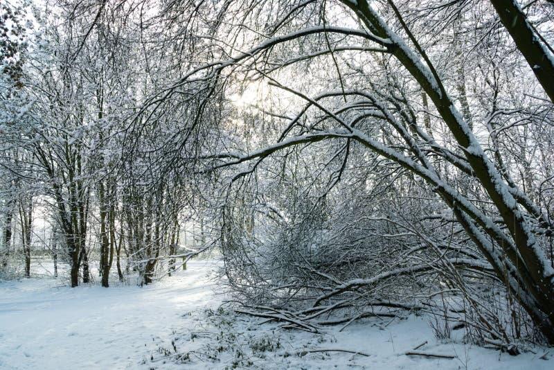Ίχνος μέσω της χιονώδους δασώδους περιοχής στοκ φωτογραφία με δικαίωμα ελεύθερης χρήσης