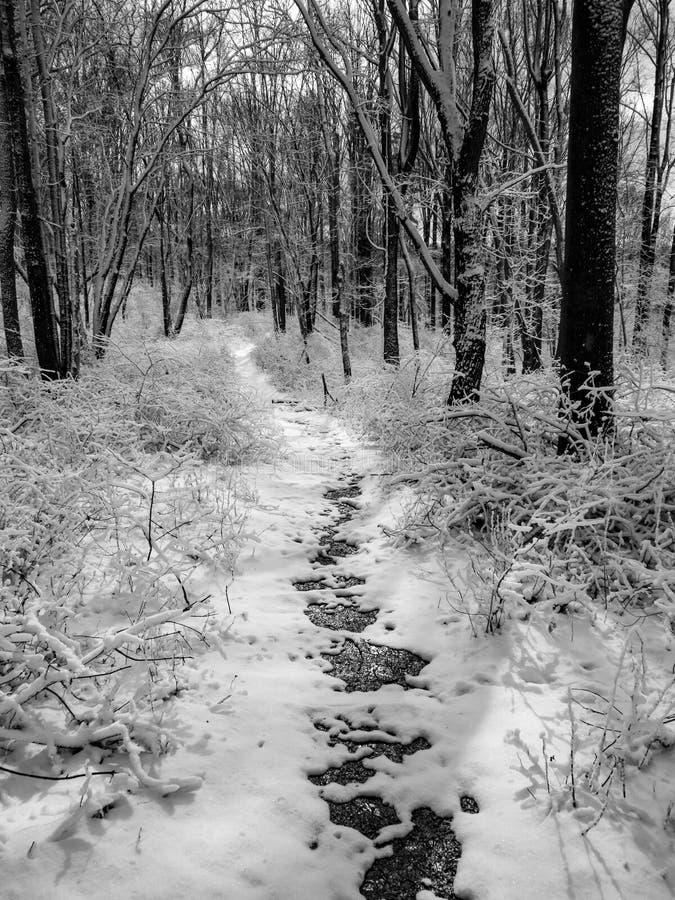 Ίχνος μέσω του δάσους το χειμώνα - B&W στοκ εικόνες με δικαίωμα ελεύθερης χρήσης