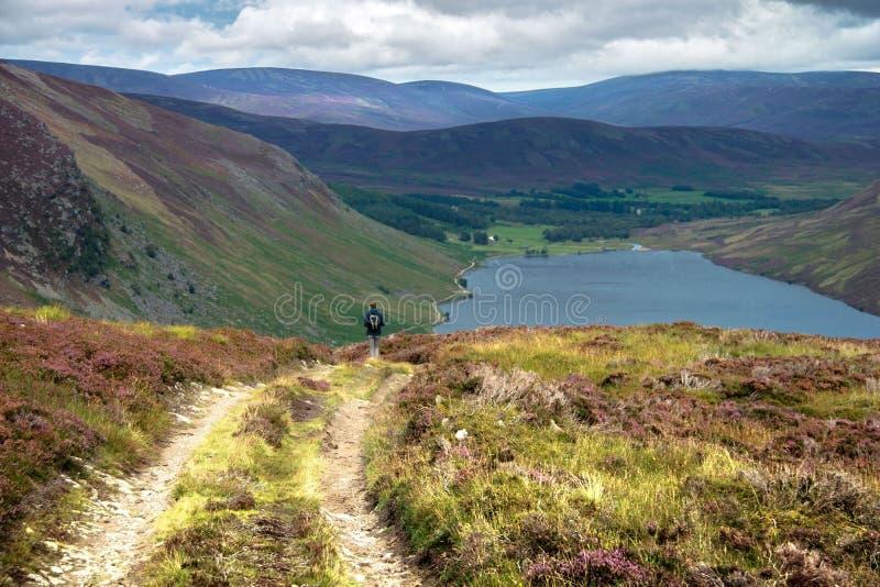 Ίχνος πεζοπορίας στο σκωτσέζικο Χάιλαντς Angus, εθνικό πάρκο Cairngorms στοκ φωτογραφίες με δικαίωμα ελεύθερης χρήσης